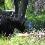 Bears and WordPress Security